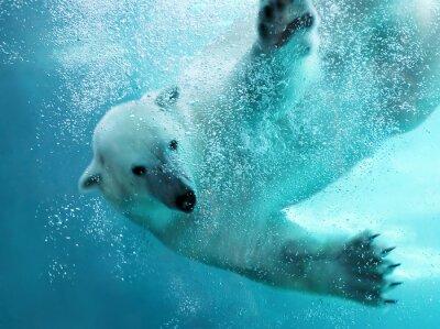 Wall mural Polar bear underwater attack