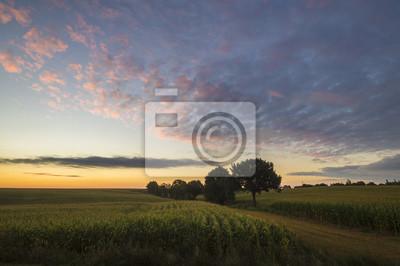 Pole kukurydzy o wschodzie słońca