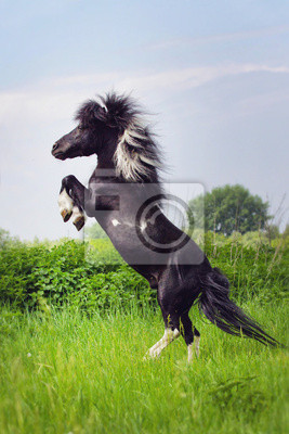 Pony standing in the middle of a green field
