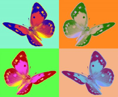 Wall mural pop art Colias butterfly
