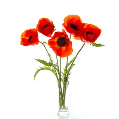Wall mural Poppies