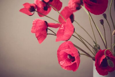 Wall mural Poppies over vintage background with retro filter