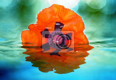 poppy and water