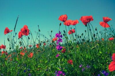 Wall mural Poppy flowers against the sky