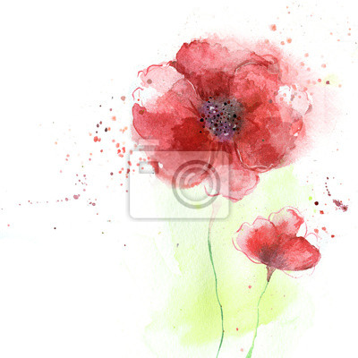 Wall mural Poppy flowers illustration.Watercolor illustration