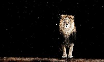 Wall mural Portrait of a Beautiful lion, geometric pattern