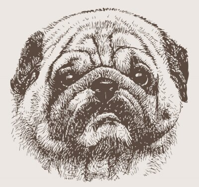 Wall mural portrait of a pug