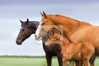 Portrait of two mares and foal at pasture