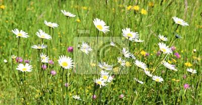 prairie ...floraison