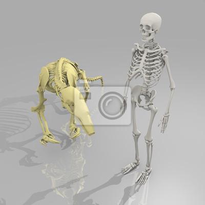 prehistoric couple