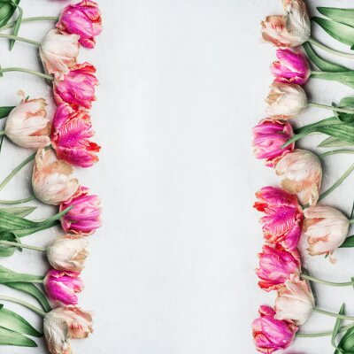 Wall mural Pretty pastel color tulips with water drops, floral frame, top view. Spring flowers concept