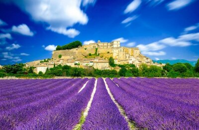 Wall mural Provence - Lavender fields in France