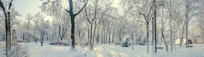 Wall mural Public park from Europe with trees and branches covered with snow and ice, benches, light pole, landscape.