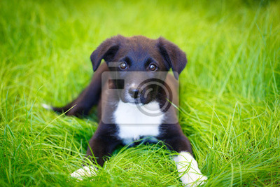 Wall mural purebred puppy