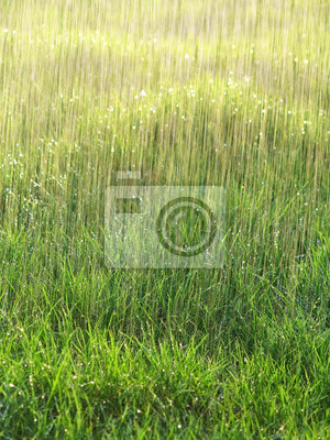 rain and wet grass - background