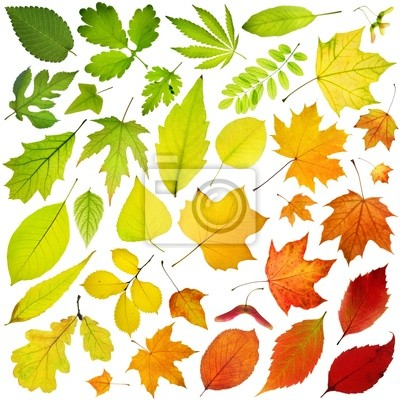 Rainbow collection of tree leaves