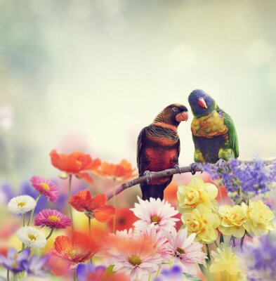 Wall mural Rainbow Parrots(Rainbow Lorikeet)