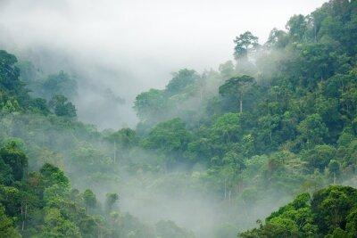 Wall mural rainforest morning fog