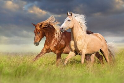 Wall mural Red and palomino horse with long blond mane in motion on field