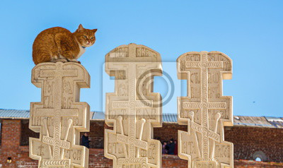 Red cat sitting on  old Russian marble monument