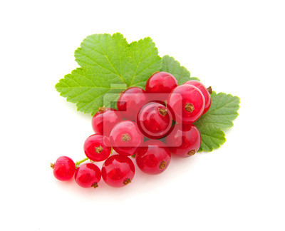 Wall mural red currants
