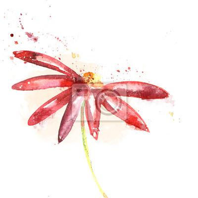 Red flower, watercolor illustration. Floral background.