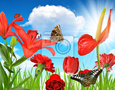 Red flowers with butterflies on the background sunny sky.