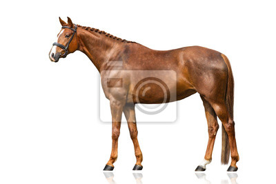 Red horse exterior isolated on white background