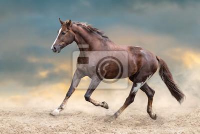 Red horse run in desert dust against blue sky