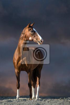 Red horse stand in desert dust against dark sky
