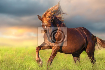 Red horse with long blond mane in motion against dawn