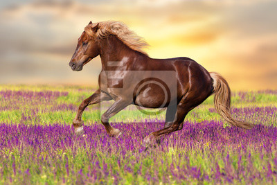 Wall mural Red horse with long blond mane in motion against dawn