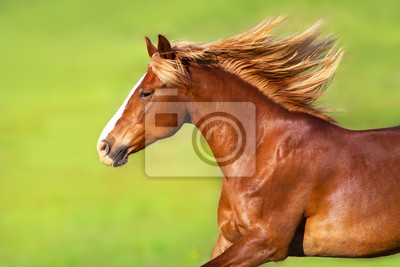 Red horse with long blond mane in motion on springmeadow