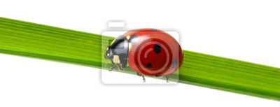red ladybug on grass
