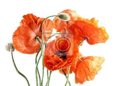 Wall mural Red poppies