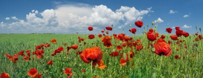 Wall mural red poppies and sky with clouds