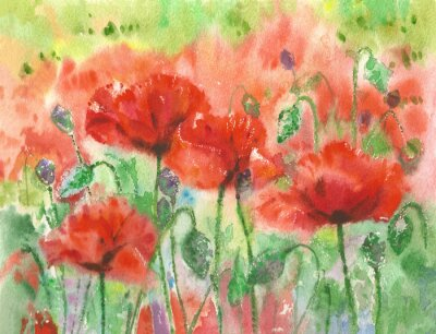 Wall mural Red poppies flowers background, watercolor.