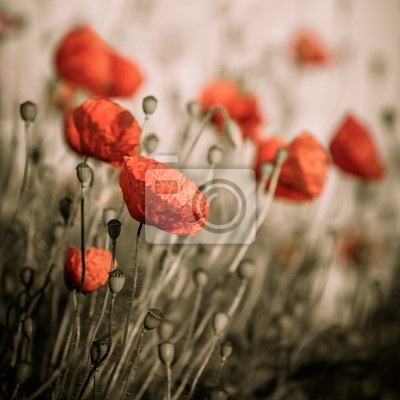Wall mural red poppy