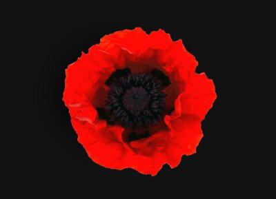 Wall mural  red poppy isolated on black  background