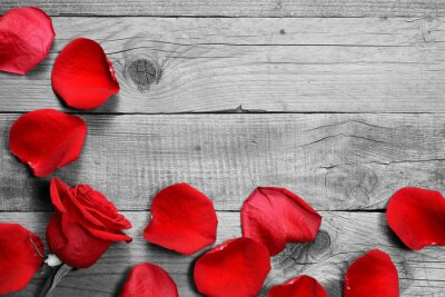 Wall mural Red rose and petals on black and white wooden background