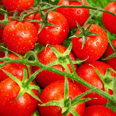 Wall mural red tomatoes