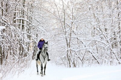 Wall mural Rider on horse at edge of snow covered woodland in winter