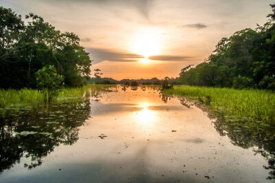 Wall mural River in the Amazon Rainforest at dusk, Peru, South America