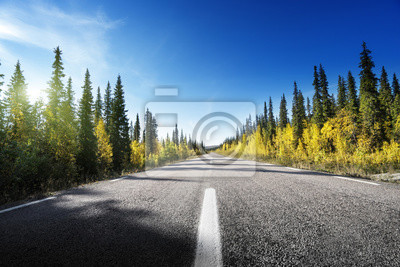 Road in autumn forest, Sweden