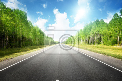 road in summer forest