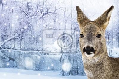 roe - doe , red deer  - winter card