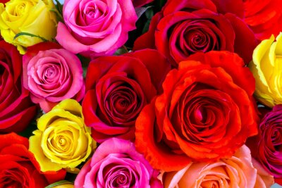 Wall mural Roses background