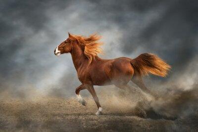 running horse running