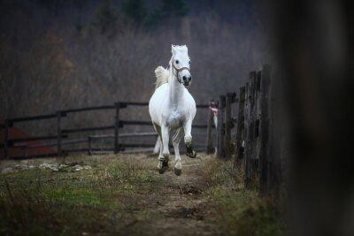 Wall mural Running white horse