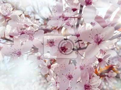 sakura and sunlight
